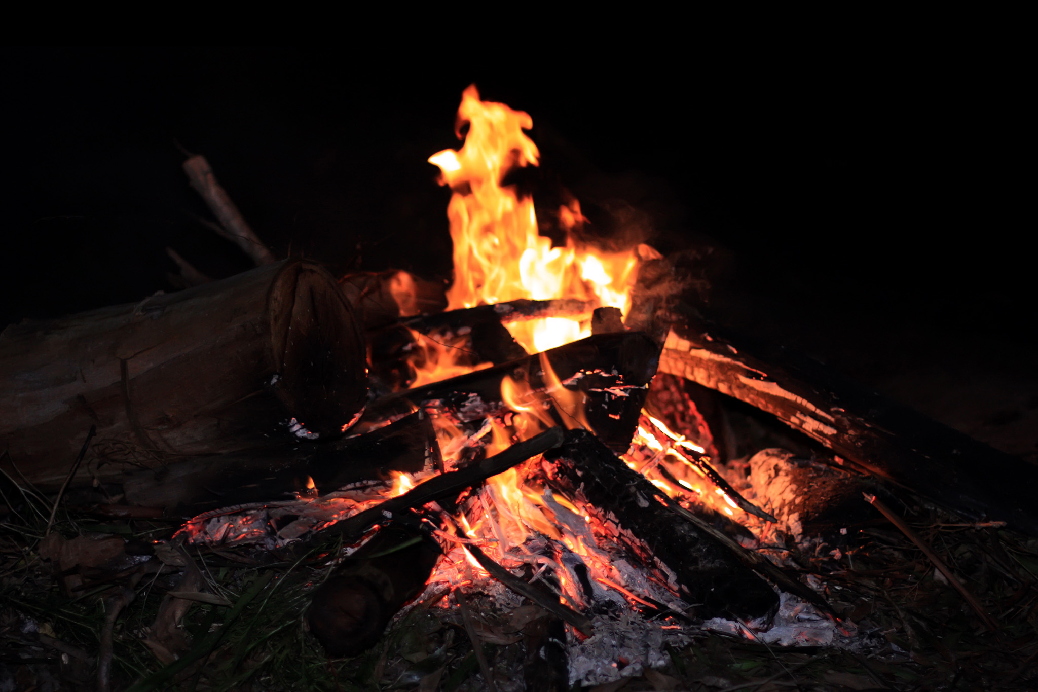 Campfire & Storytelling tour in the Everglades