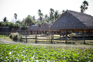 Native American village in the Everglades